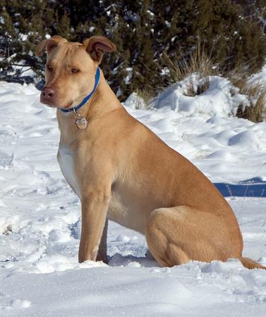 Abo - Adventure Dog
