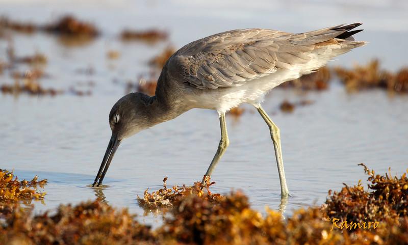Bird 10-17-15 Port A 063.jpg