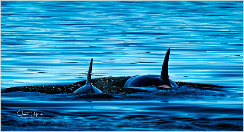 SR3_4729 Orcas LPN W.jpg