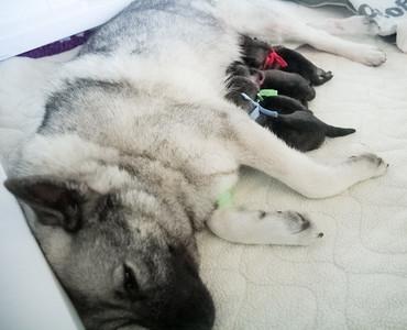 2017 Birth Day Monday Feb. 20 2017 Alex x Mark Pups