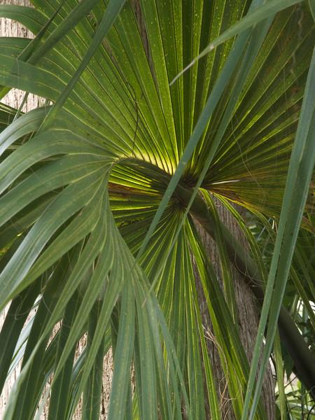 Palmetto. Magnolia Plantation Gardens