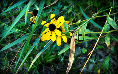 late summer into early fall Michigan 2013