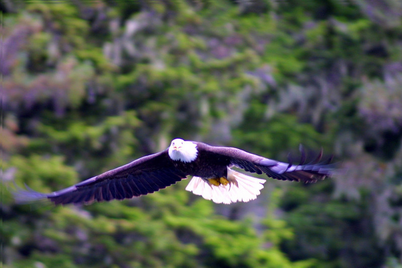 eagles from disc 017.jpg