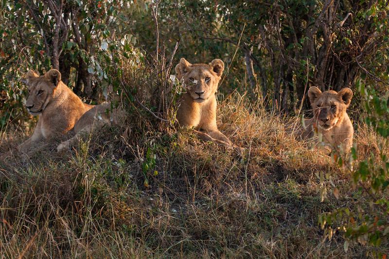 2013-Kenya2013-0719-0026.jpg