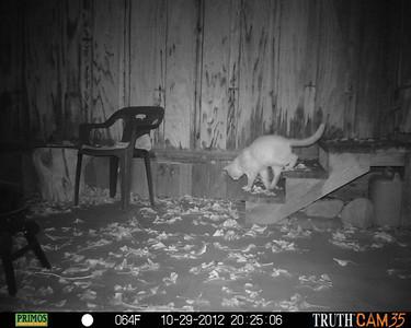 Cats come & cats go.