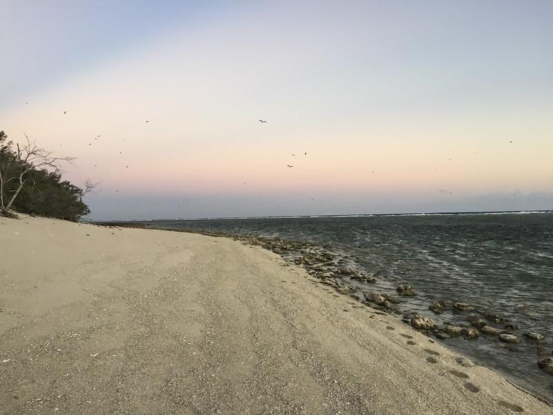 09. Lady Elliott Island-1345.jpg