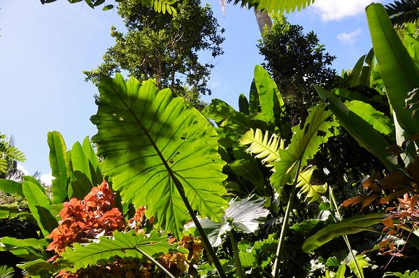 Hunte's Garden & Flower Forest, Barbados (January 2017)