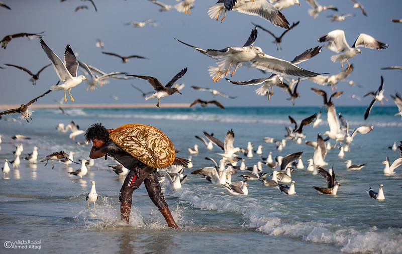 Sardine Season (6)- Dhofar.jpg
