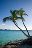 Beautiful tropical shoreline with two palm trees leaning over clear green water.