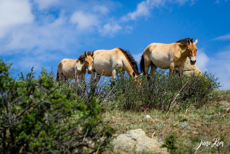 Kustei National Park__6109420-Juno Kim.jpg