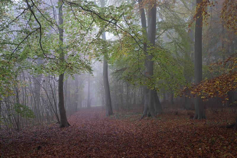 Bisham_Woods-11.jpg