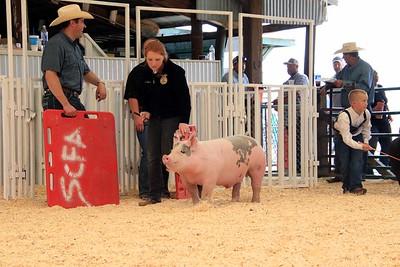 Market Swine 11