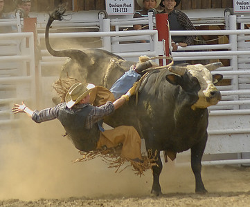 COOMBS RODEO--2008