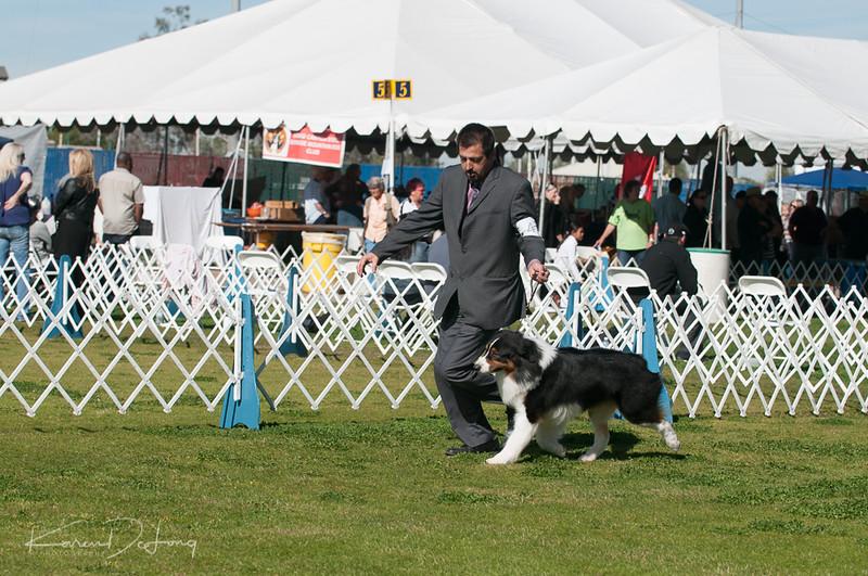20170205_Australian Shepherds_Lost Dutchman Kennel Club-60.jpg