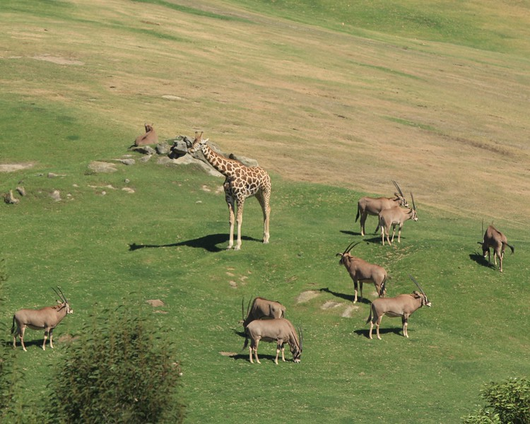 San Diego wild animal pakr 201700059.jpg