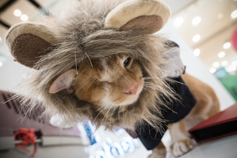 VividSnaps-The-Seletar-Mall-CAT-Dress-Up-Contest-081.jpg