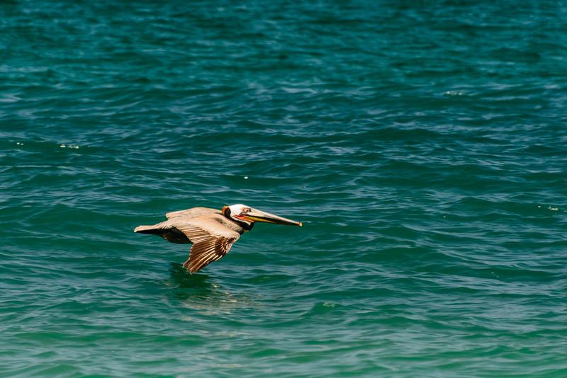 Baja Sea Kayak_3_17 (695 of 1022).jpg