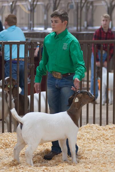 kay_county_showdown_goats_20191207-142.jpg