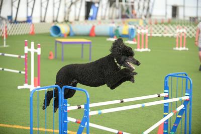 Berks County Dog Traing Club AKC Agility Trial June 27-29
