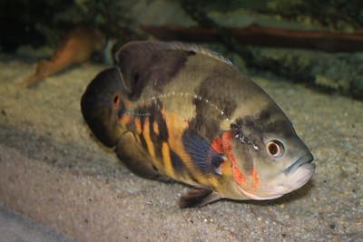 06 - National Aquarium Baltimore