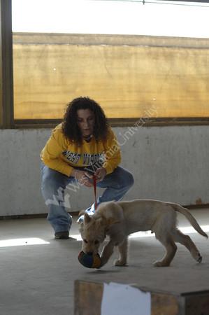 24544 ASHLEY RILEY TRAINING SERVICE DOGS