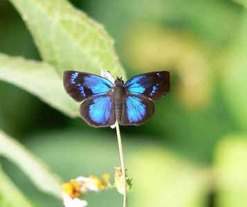 Chiapas Butterflies 2006