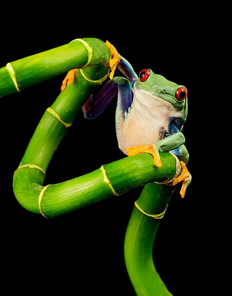 Frogscapes099_Cuchara_5439_021213_144729_5DM3L_11x14.jpg