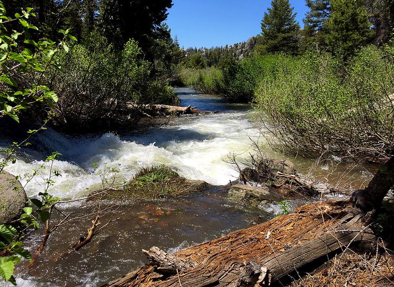 caples creek.jpg