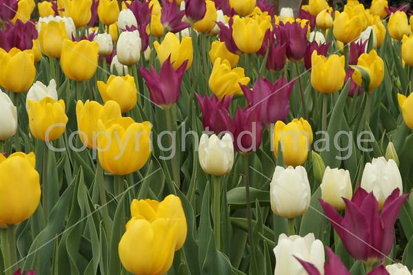 Sunken Gardens March 2012
