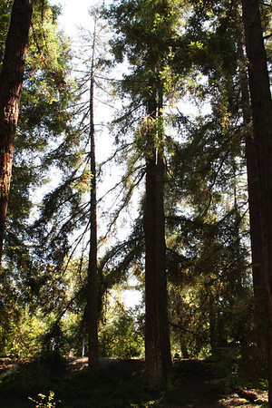 09.02.11 Redwood Grove