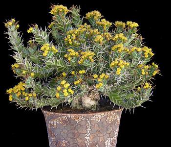Show Plants