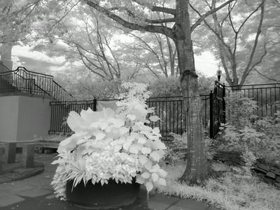 Infrared Black and White BBG