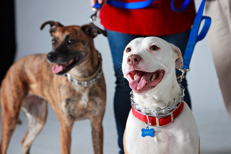 Picture Pawfect - 19 marca 2017 - 401-1.jpg