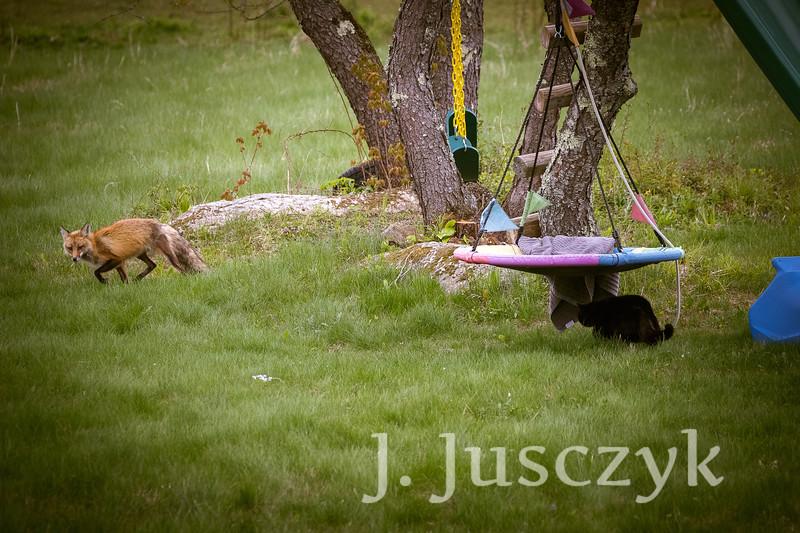 Jusczyk2021-6221.jpg