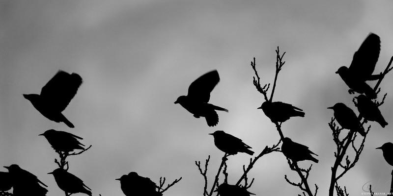 Birds at Dusk 2 of 4