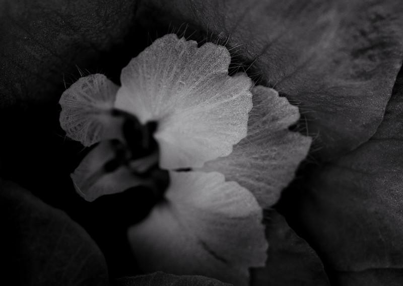 flower mind-2.jpg