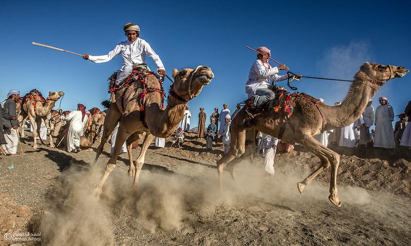 c321- Camel Race.jpg