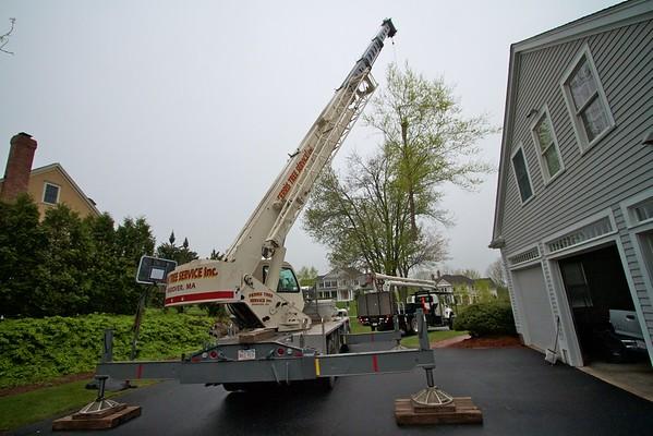Ferris tree work 2012