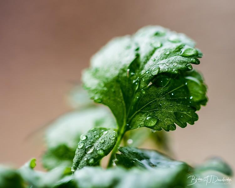 Herbs_Macro-0758.jpg