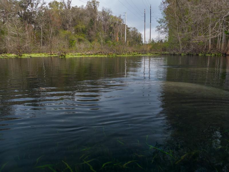 02-23-2019 Ichetucknee River kayak (11 of 78).jpg