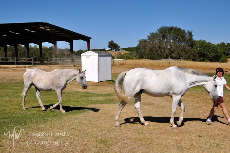 EB&Horses-040.jpg