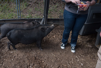 Max with pigs