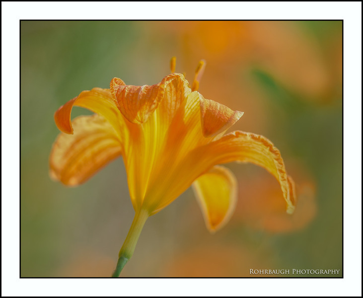 Rohrbaugh Photography Flowers 21.jpg