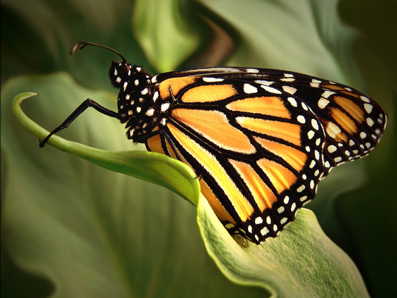 Monarch Butterfly Pose