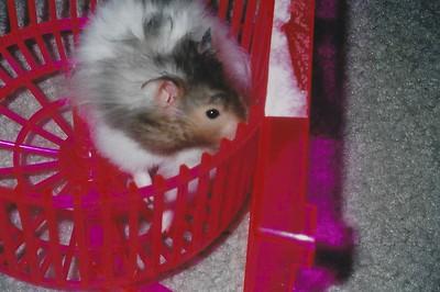 I had a hamster??  Who knew?