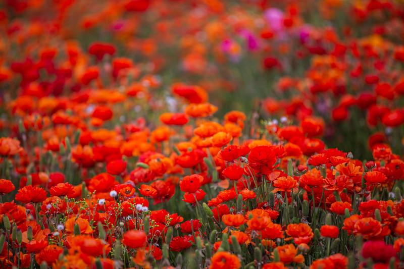 Spring Flowers B-417.jpg