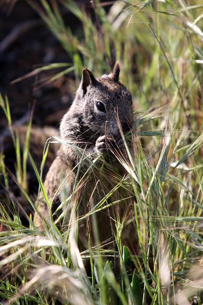 Squirrel Photo Shoot @ Swami's