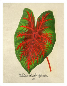 Leaf Prints from 1867