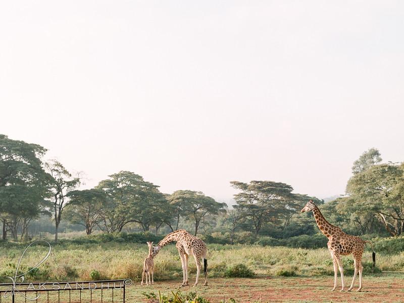 Safari-Africans-123.jpg