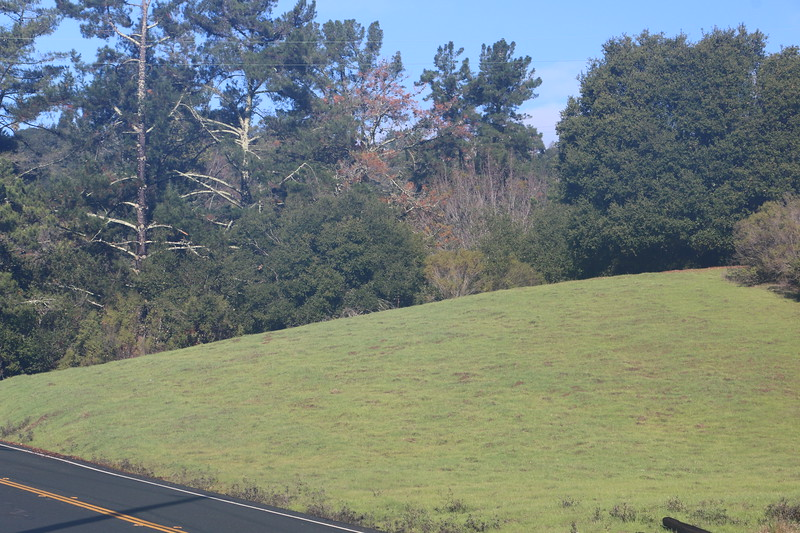Newly sprouted grass on hillside